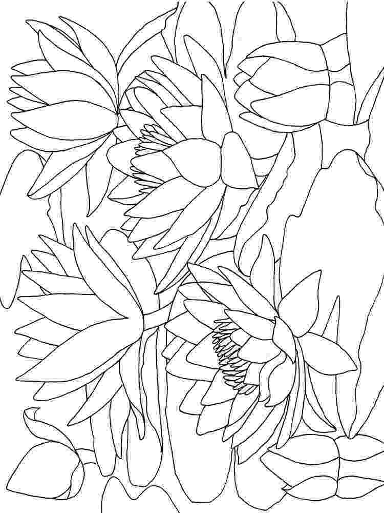 water lily coloring page giant water lily coloring page download free giant water page lily water coloring