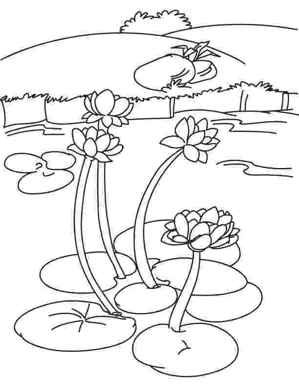 water lily coloring page lotus flower is not water lily coloring page kids play color water coloring page lily