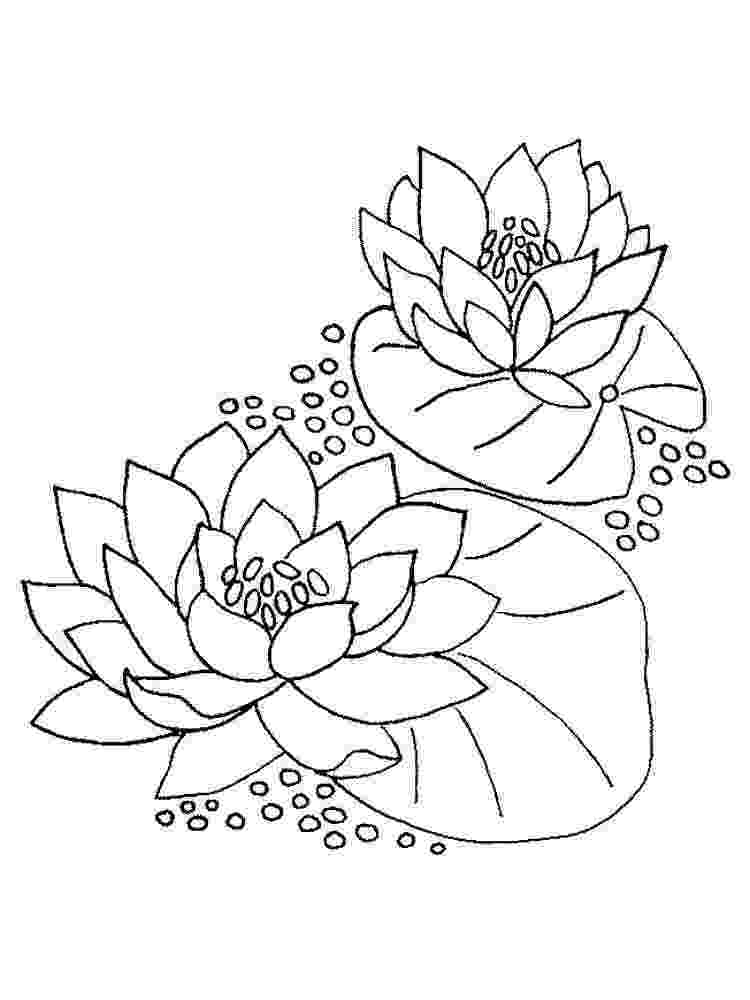 water lily coloring page water lilies coloring pages download and print for free lily water coloring page