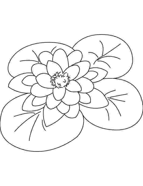 water lily coloring page water lilies coloring pages download and print for free water page coloring lily