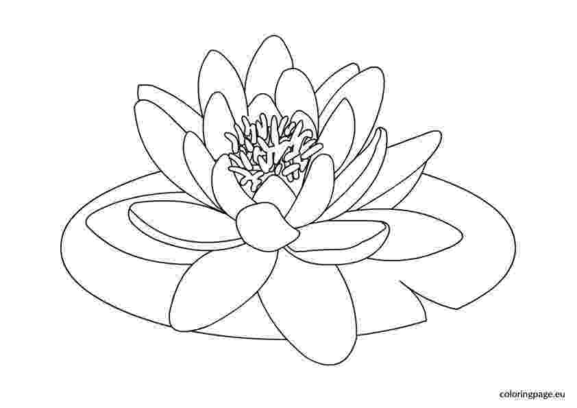 water lily coloring page water lily coloring page lily coloring water page