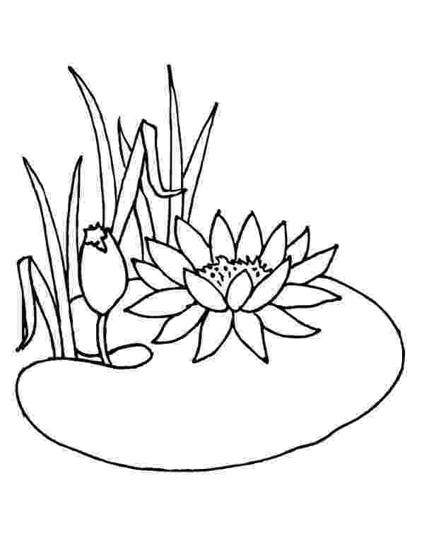 water lily coloring page water lily coloring pages download and print water lily lily coloring water page