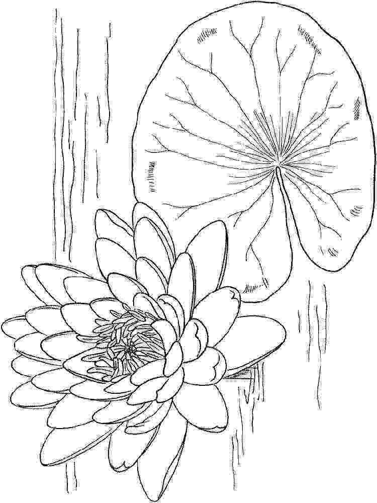 water lily coloring page waterlilies water lily page coloring