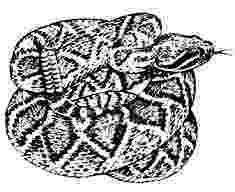western diamondback rattlesnake coloring pages ausmalbild klapperschlange ausmalbilder kostenlos zum rattlesnake coloring diamondback pages western
