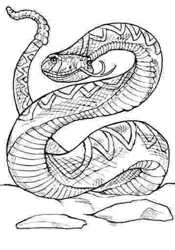 western diamondback rattlesnake coloring pages clip art animal patterns western diamondback rattlesnake western rattlesnake pages diamondback coloring