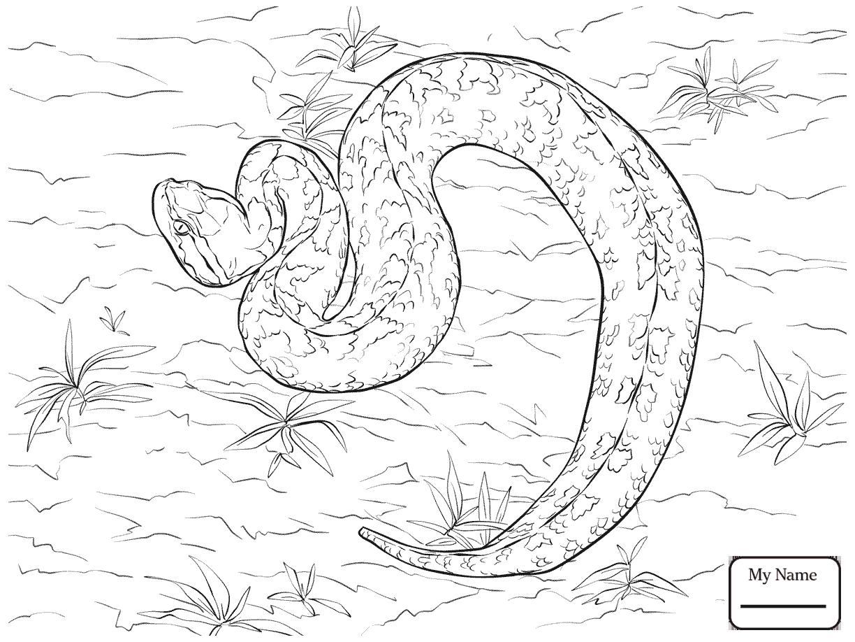 western diamondback rattlesnake coloring pages diamondback rattlesnake coloring page eastern pages diamondback coloring western rattlesnake