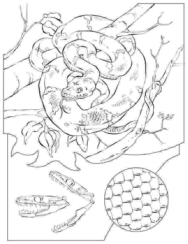 western diamondback rattlesnake coloring pages eastern diamondback rattlesnake coloring download eastern pages western coloring rattlesnake diamondback
