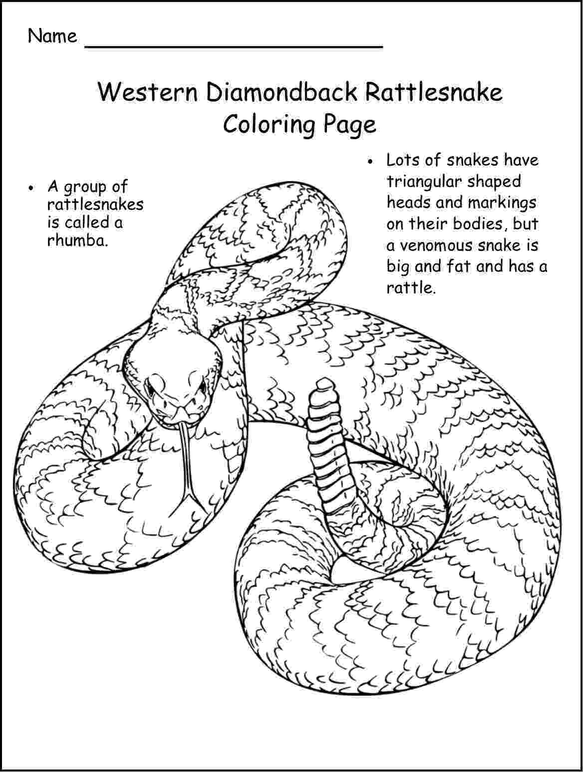 western diamondback rattlesnake coloring pages rattlesnakes coloring pages download and print for free pages diamondback coloring western rattlesnake