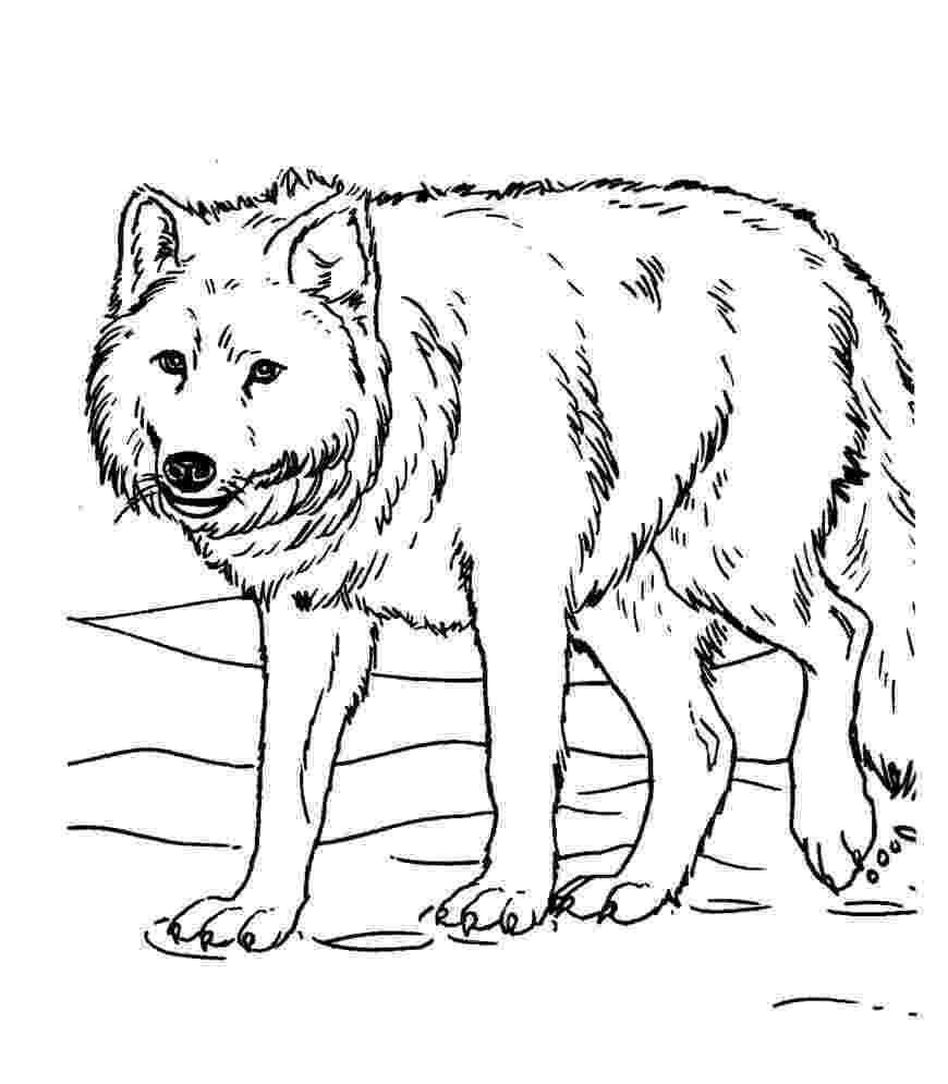 wolf coloring free printable wolf coloring pages for kids coloring wolf 1 2