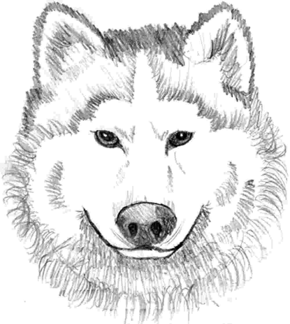 wolf coloring free printable wolf coloring pages for kids wolf coloring 1 1