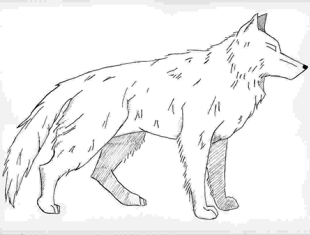 wolf coloring free printable wolf coloring pages for kids wolf coloring 1 5