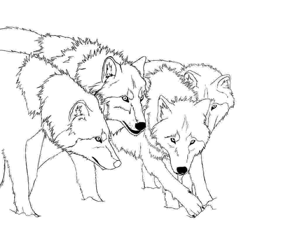wolf coloring print download wolf coloring pages theme wolf coloring 1 1