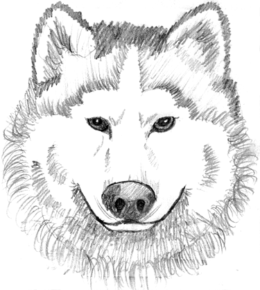wolf face coloring pages moses gt 42172 moses coloring pages 6 coloring face wolf pages
