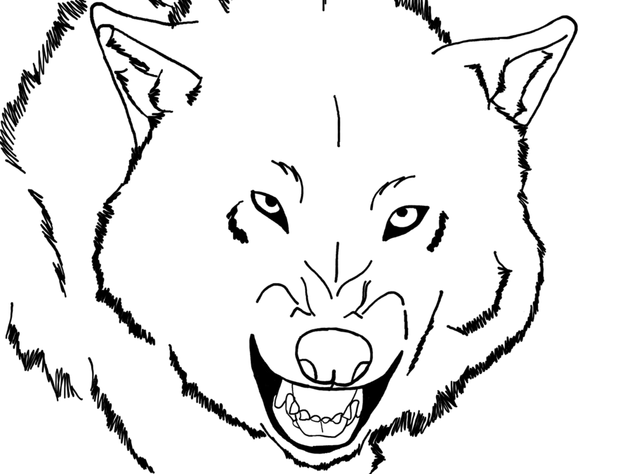 wolf face coloring pages wolf head stock vector illustration of wild aggression wolf coloring face pages
