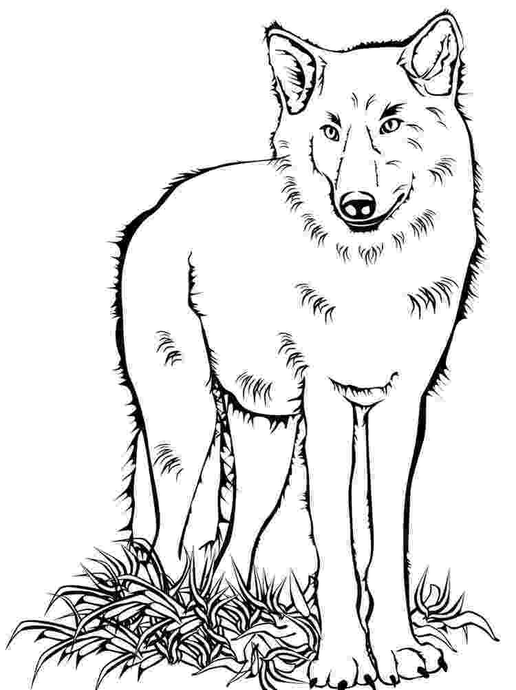 wolf pictures to color and print stylish wolf coloring page free printable coloring pages wolf color to pictures print and