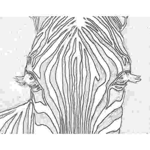 zebra sketch how to draw a chibi zebra drawingforallnet zebra sketch