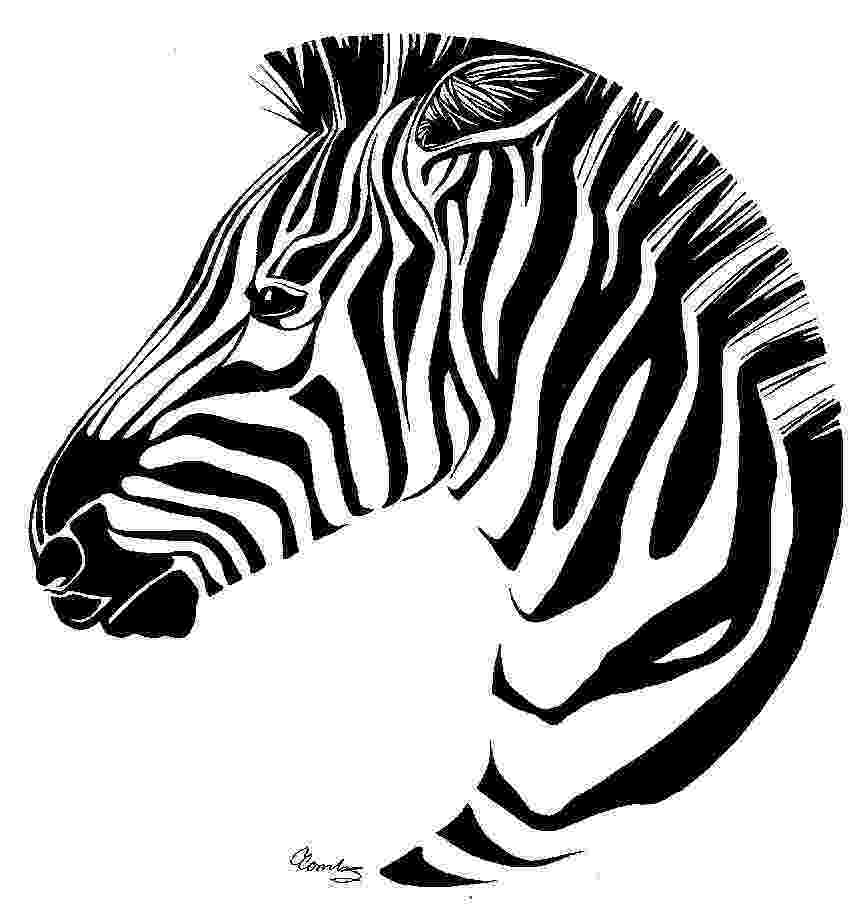 zebra sketch how to draw a zebra head youtube sketch zebra