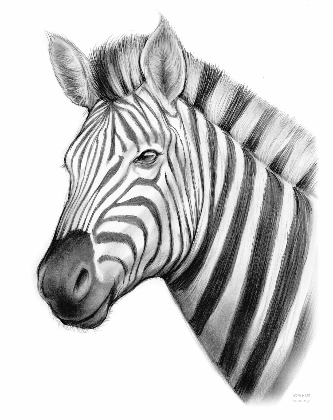 zebra sketch how to draw a zebra step by step safari animals animals sketch zebra