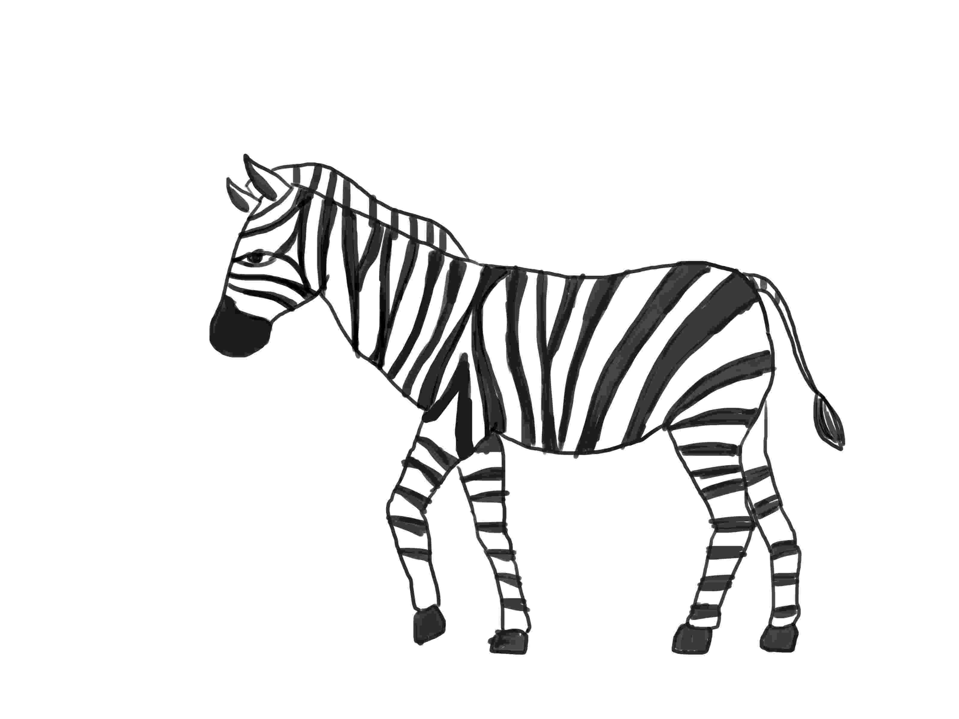 zebra sketch how to draw a zebra with pictures wikihow zebra sketch