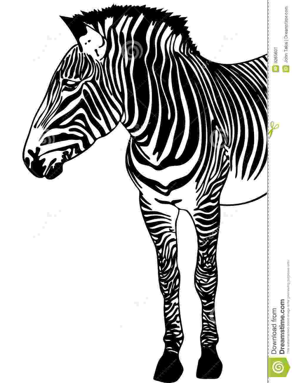 zebra sketch how to draw a zebra youtube zebra sketch