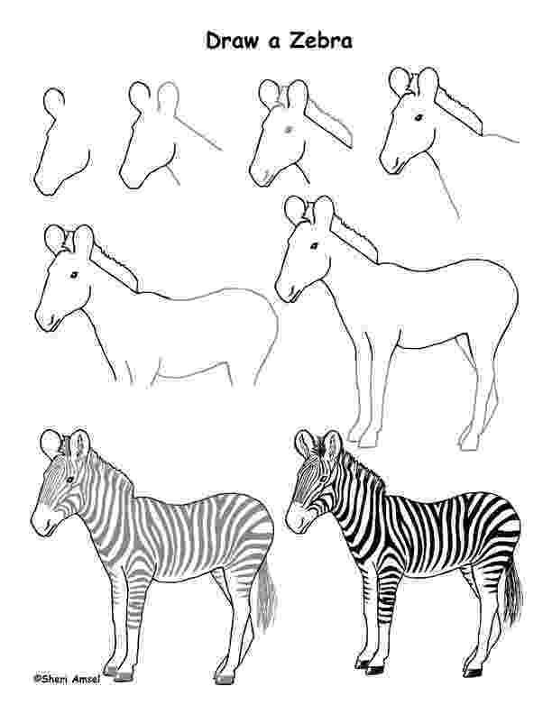zebra sketch illustration and book cover artwork sketches and planning zebra sketch