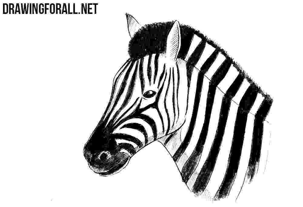 zebra sketch pin by transparent png images on animal png zebra zebra sketch