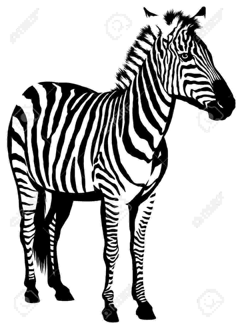 zebra sketch simple zebra drawing by elispretendartshop on etsy sketch zebra