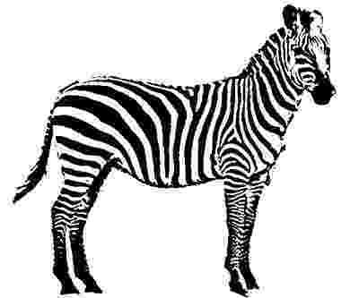 zebra sketch zebra animal sketch image sketch zebra sketch