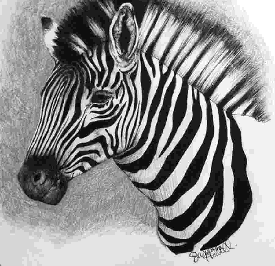 zebra sketch zebra by greg joens artwantedcom sketch zebra