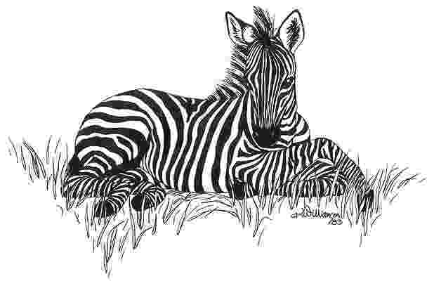 zebra sketch zebra by rens ink zebra drawing zebra painting pencil zebra sketch