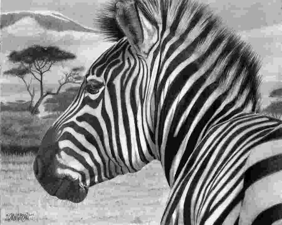 zebra sketch zebra drawing pencil sketch colorful realistic art zebra sketch