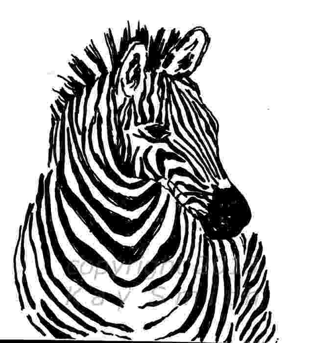 zebra sketch zebra foal ink sketch kerri bennett williamson sketch zebra