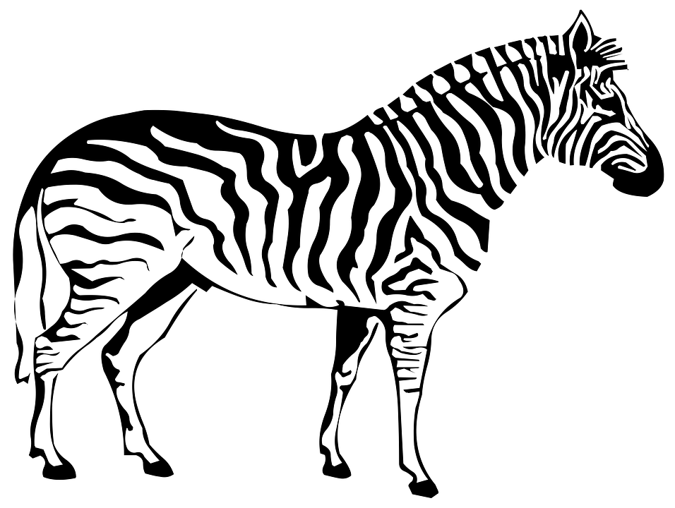 zebra sketch zebra pencil art print a4 a3 signed by uk artist artwork sketch zebra