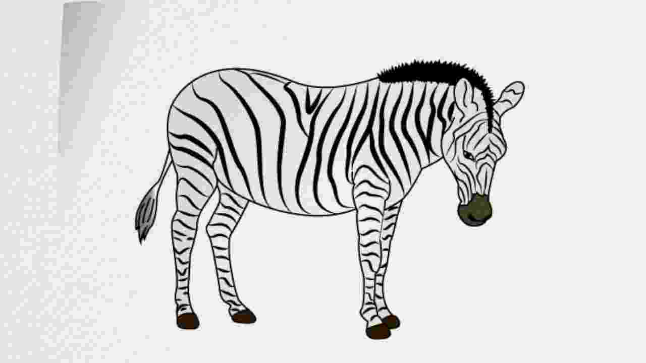 zebra sketch zebra the aspiring illustrator sketch zebra