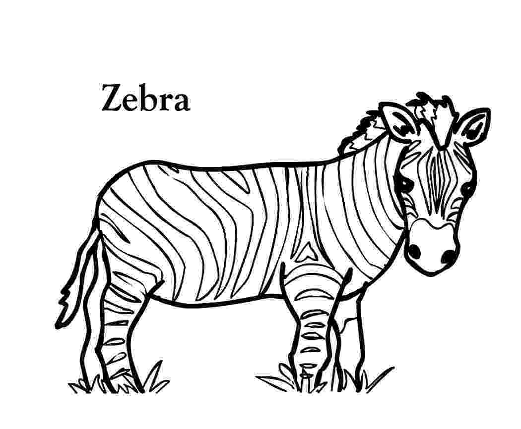 zebra to colour zebra line drawing at getdrawingscom free for personal colour zebra to