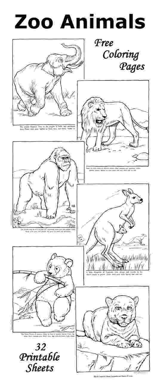 zoo animals colouring pages free zoo coloring pages zoo animal coloring pages zoo free pages zoo animals colouring