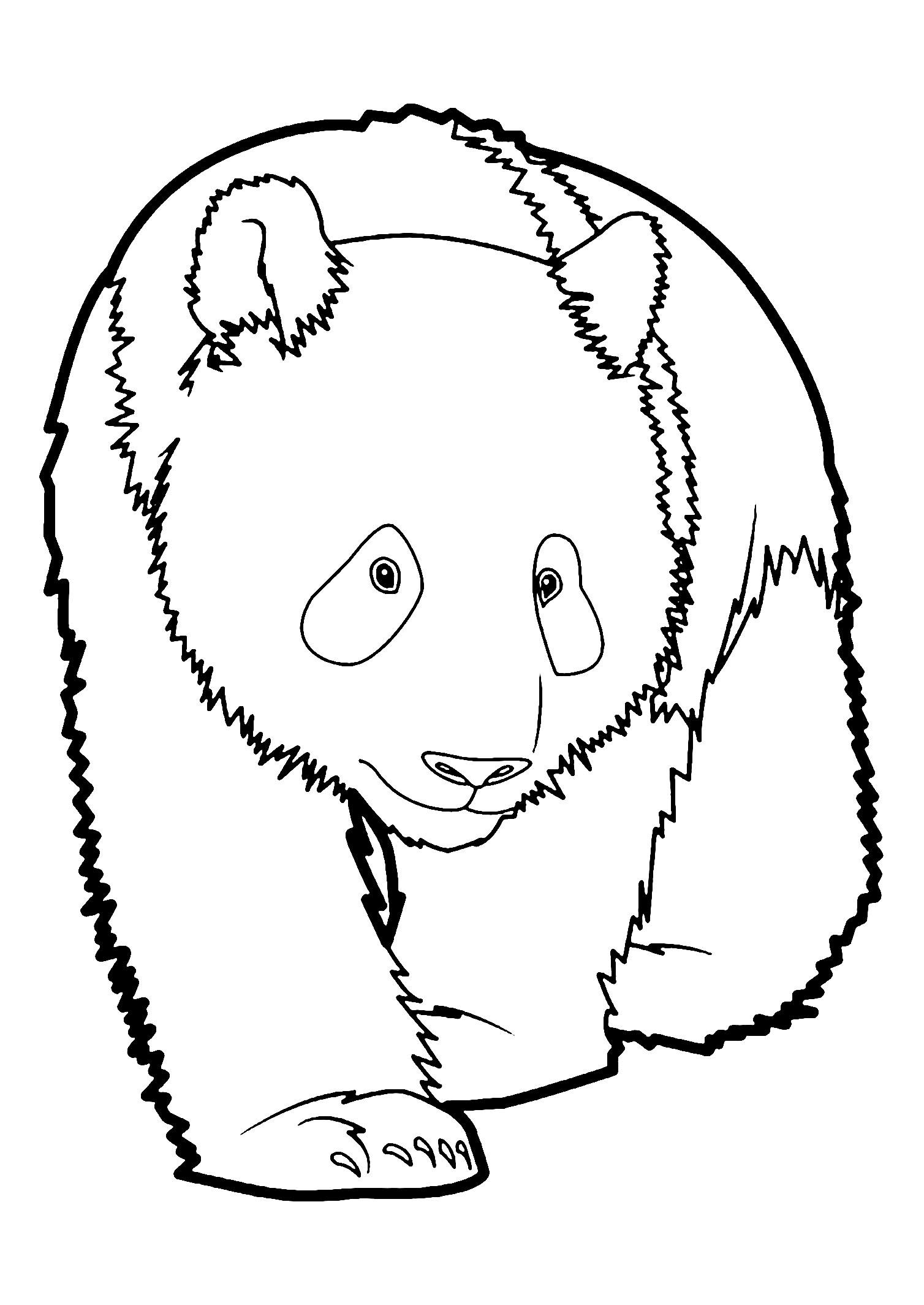 coloring panda panda coloring pages for adults at getdrawings free download coloring panda